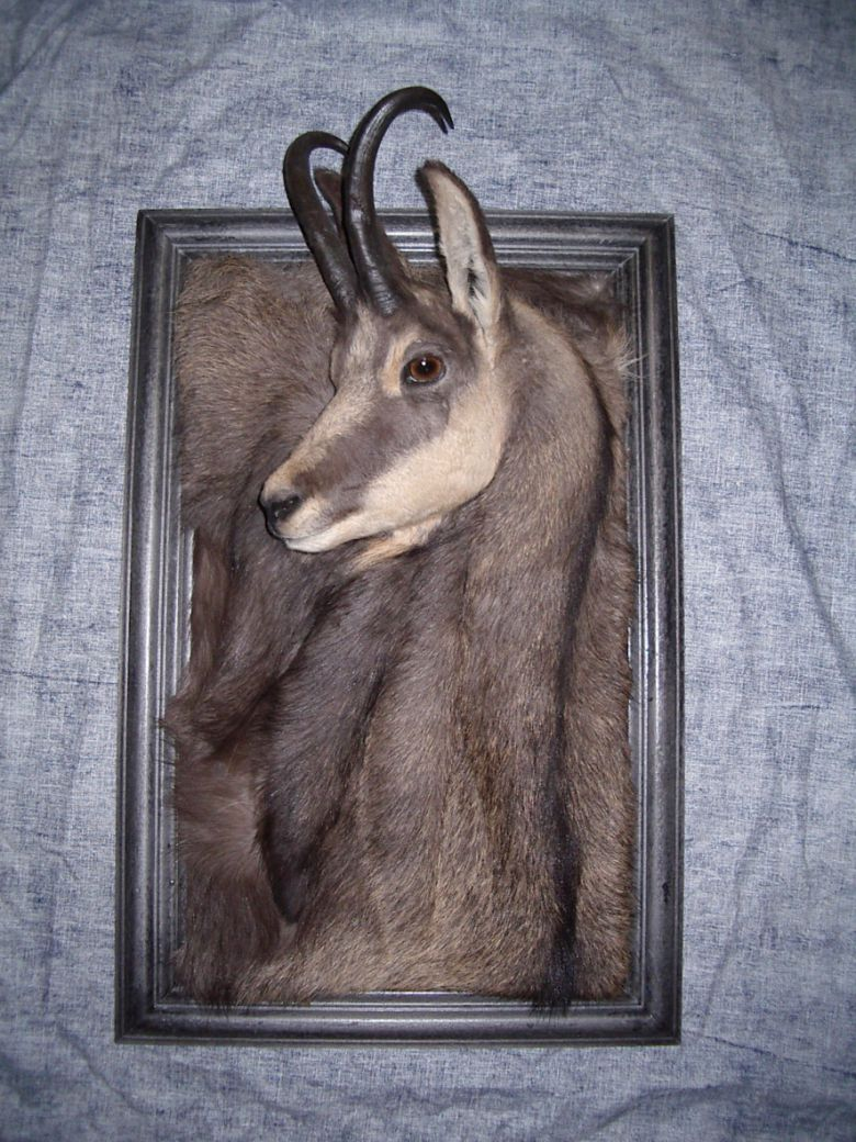 Wall-Art- taxidermie
